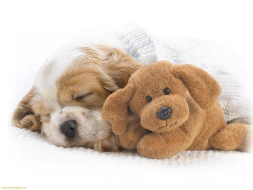 Puppies-sleeping-with-toy-1